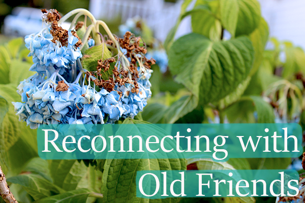 reconnectingoldfriends.png