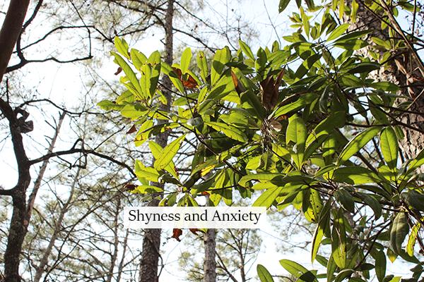 shynessandanxiety.png